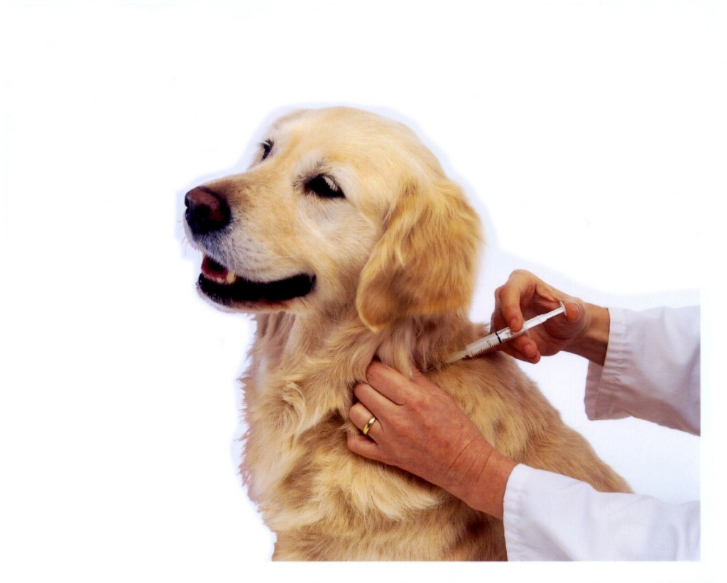 Pet Travel - Dog Vaccinations