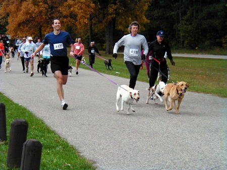 run-with-the-dogs-450x338