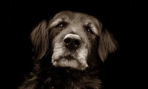 senior-dog-e1353361879372