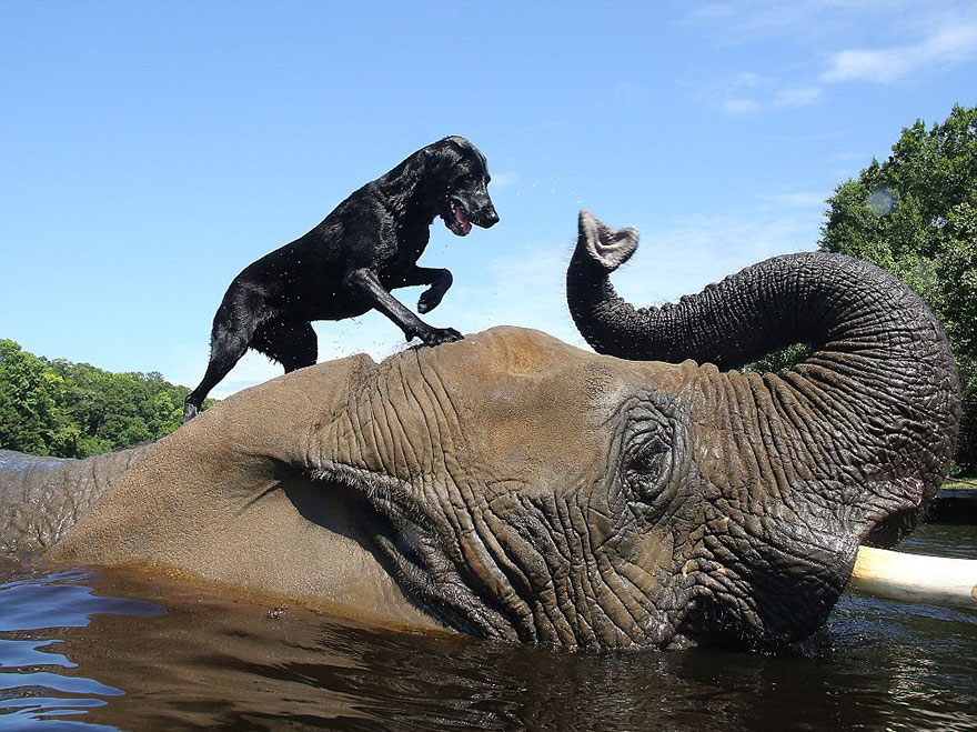 elephant-dog-friendship-bubbles-and-bella-1