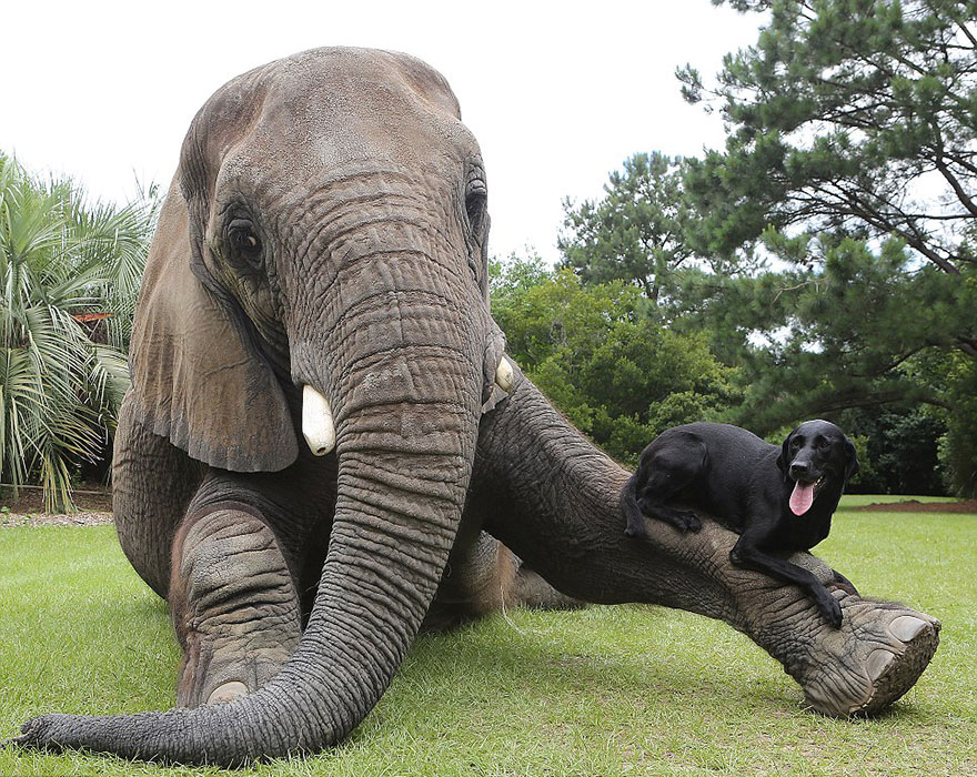 elephant-dog-friendship-bubbles-and-bella-6