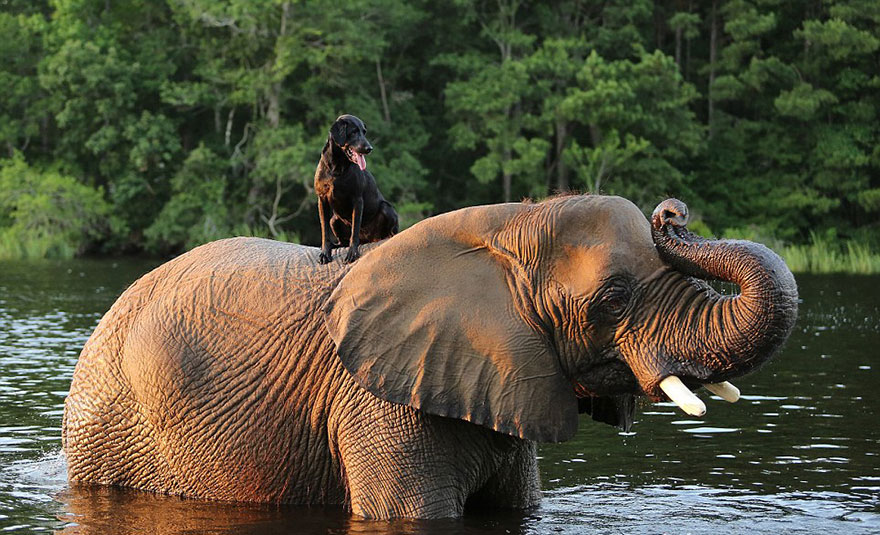 elephant-dog-friendship-bubbles-and-bella-7