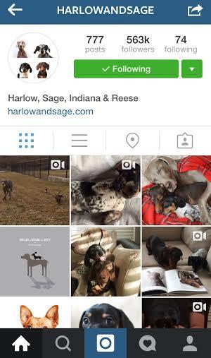 @harlowandsage instagram