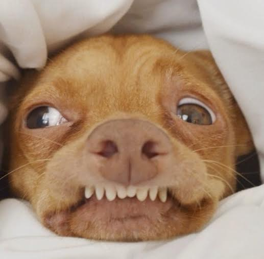 Beautiful, hilarious and fantastic dog Instagrams