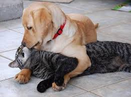 dog-cat friendship