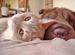 dog-cat friendships