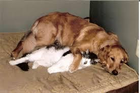dog-cat friendship
