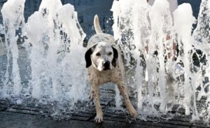dogs in hot weather