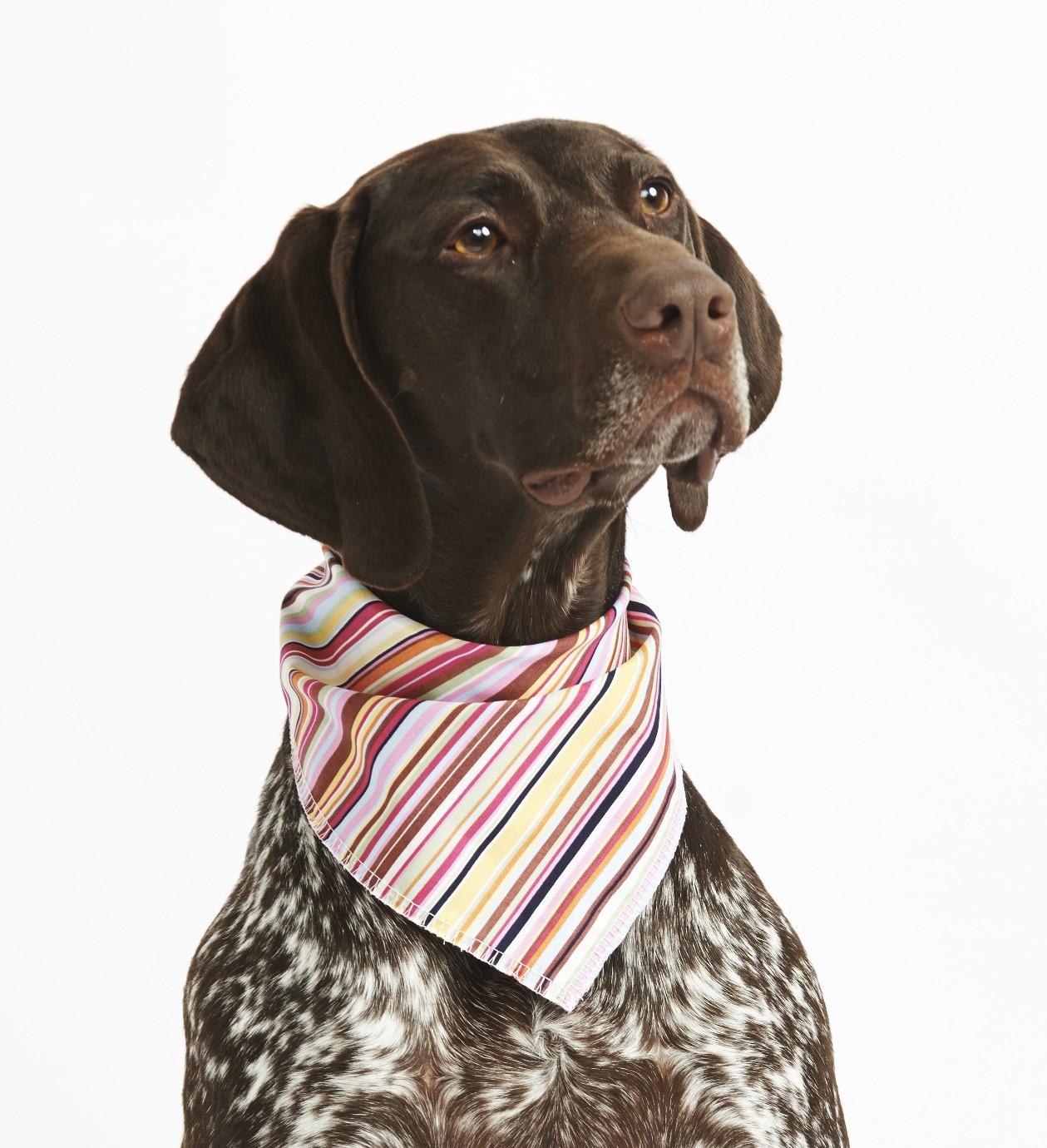 Candy Stripes Dog Bandana