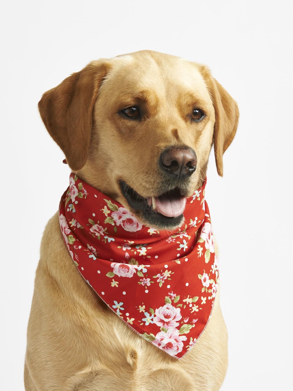Red Vintage Primrose Dog Bandana