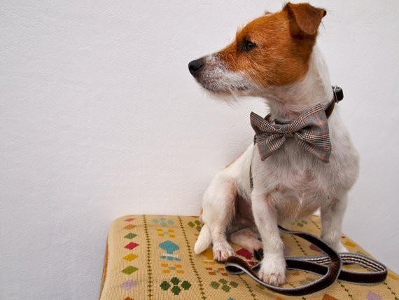 mini_astaire_puppy_bow_tie_collar_and_lead_set_2