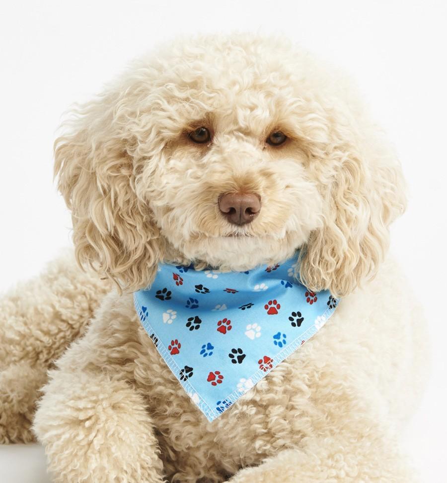 puppypawsmodel