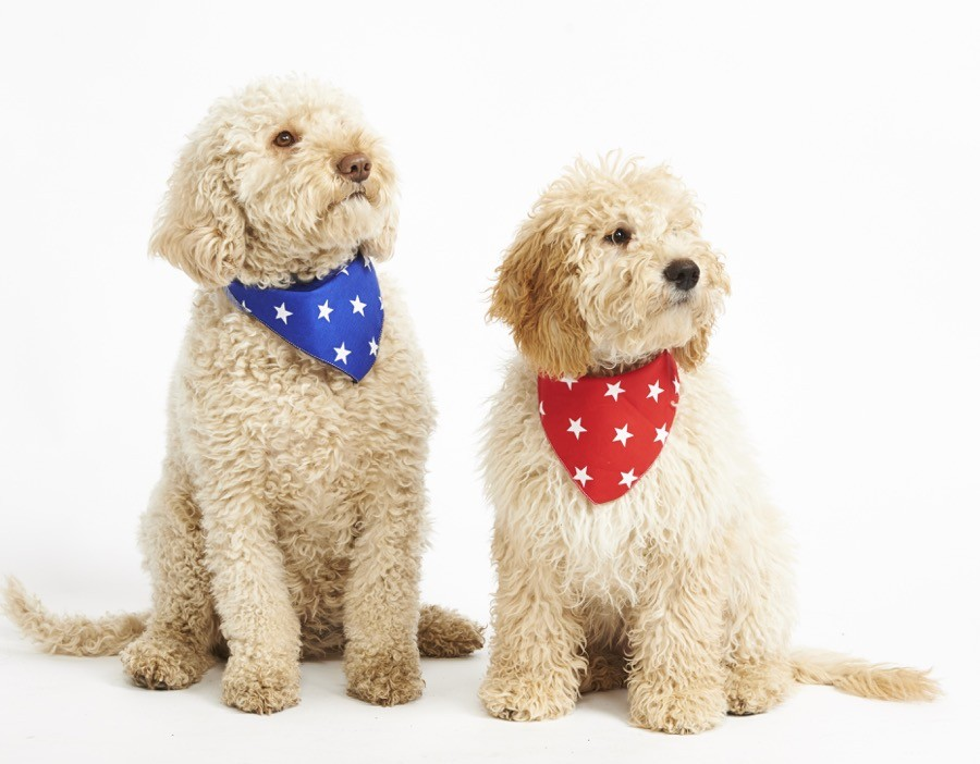 Dog Bandanas at Chelsea Dogs
