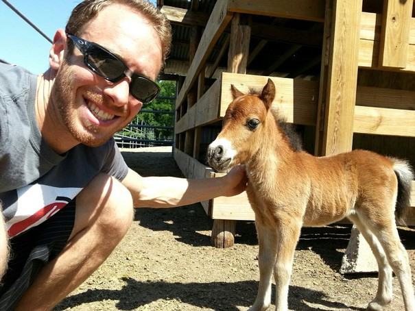 Look how tiny this Mini Horse is!