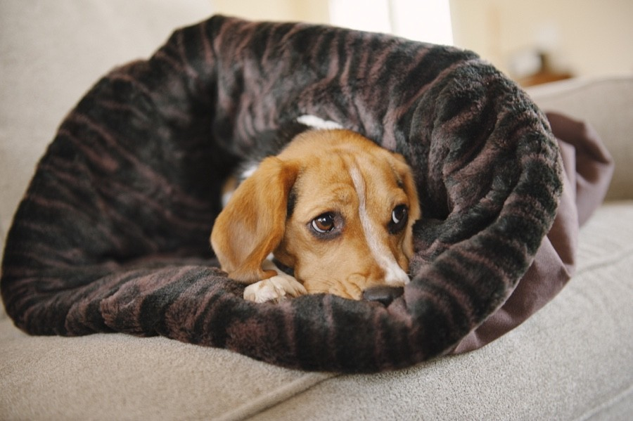 Best Dog Beds For Small Breeds