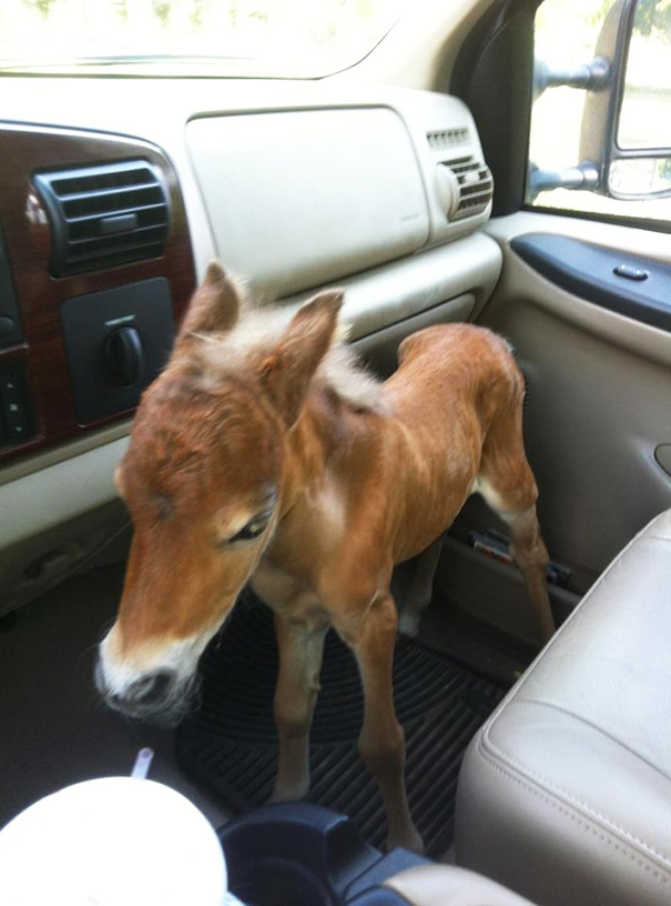 A Veterinarian Rescued This Horse