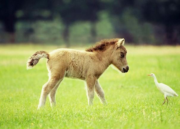A Miniature Horse Having A Conversation With A Bird