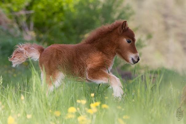 Baby Horse Mimi
