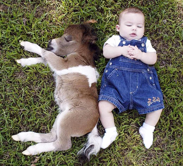 Tiny Horse With a baby