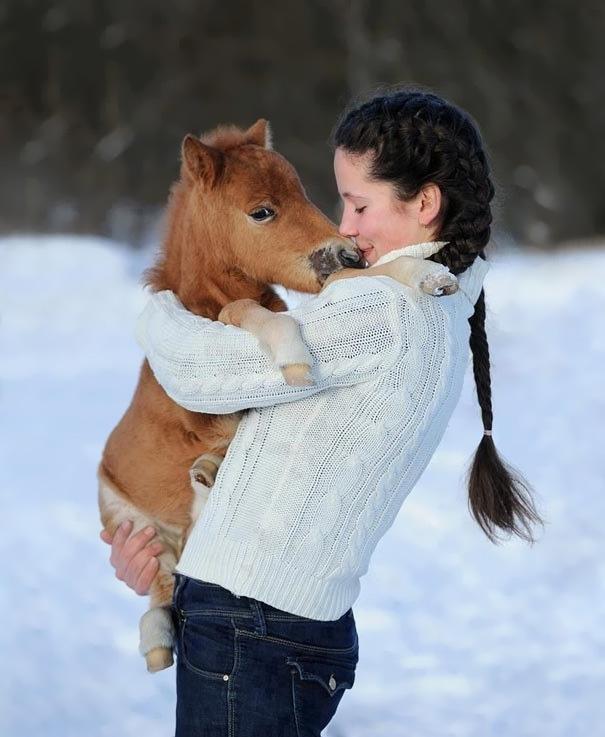 Just a Mini Horse