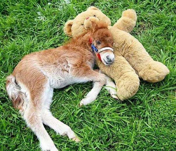 Baby Horse with a teddy bear