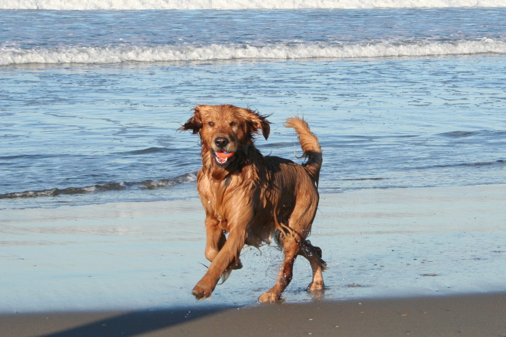 10 Great Reasons For Taking Your Dog On Holiday