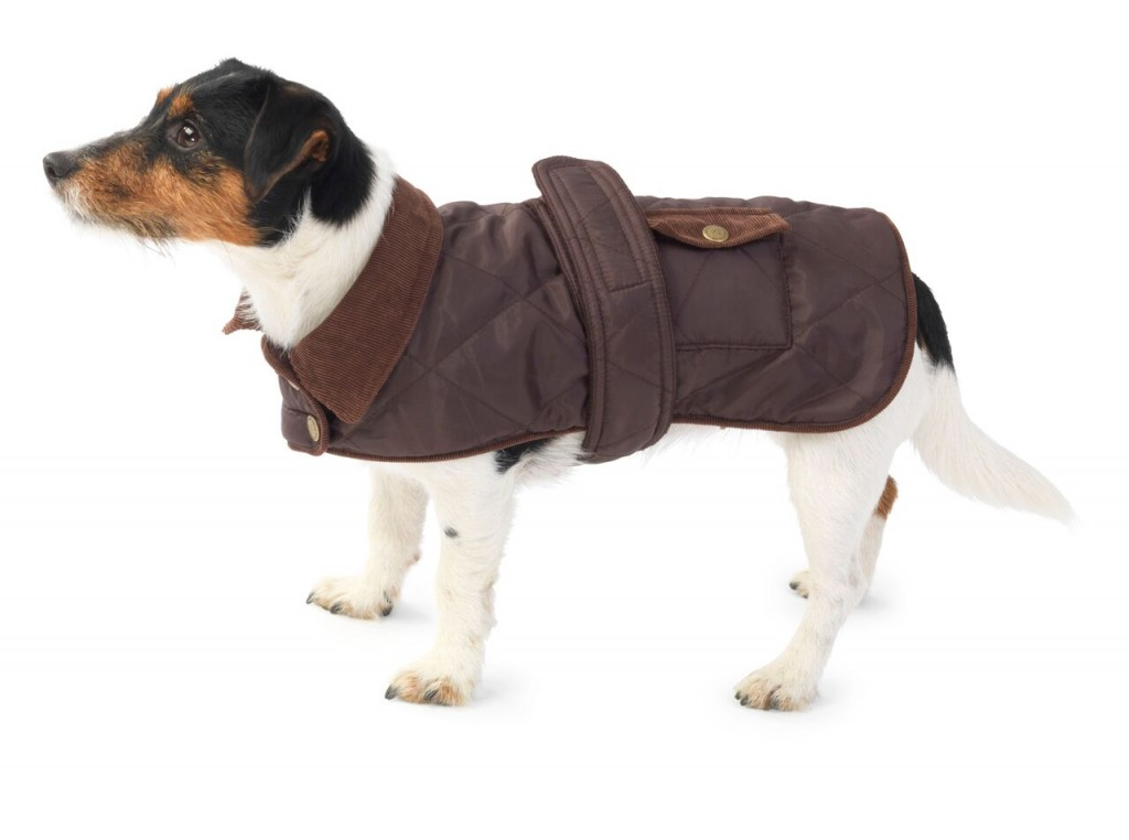 Winter and Waterproof Dog Coats 2015