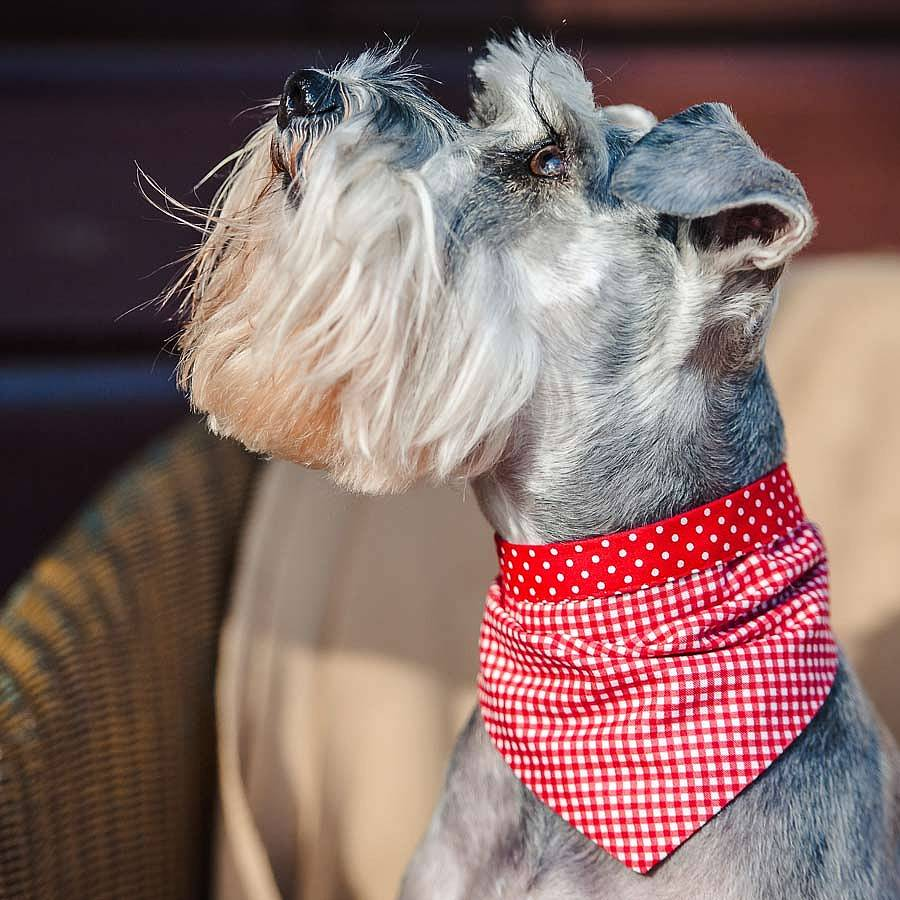 Reversible Dog Bandanas Red Spot and Gingham