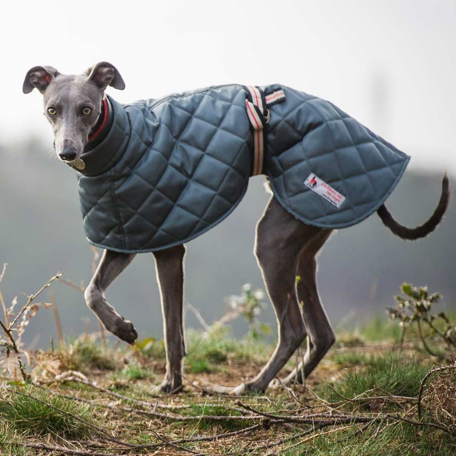 Greyhound Coats Quilted Lightweight