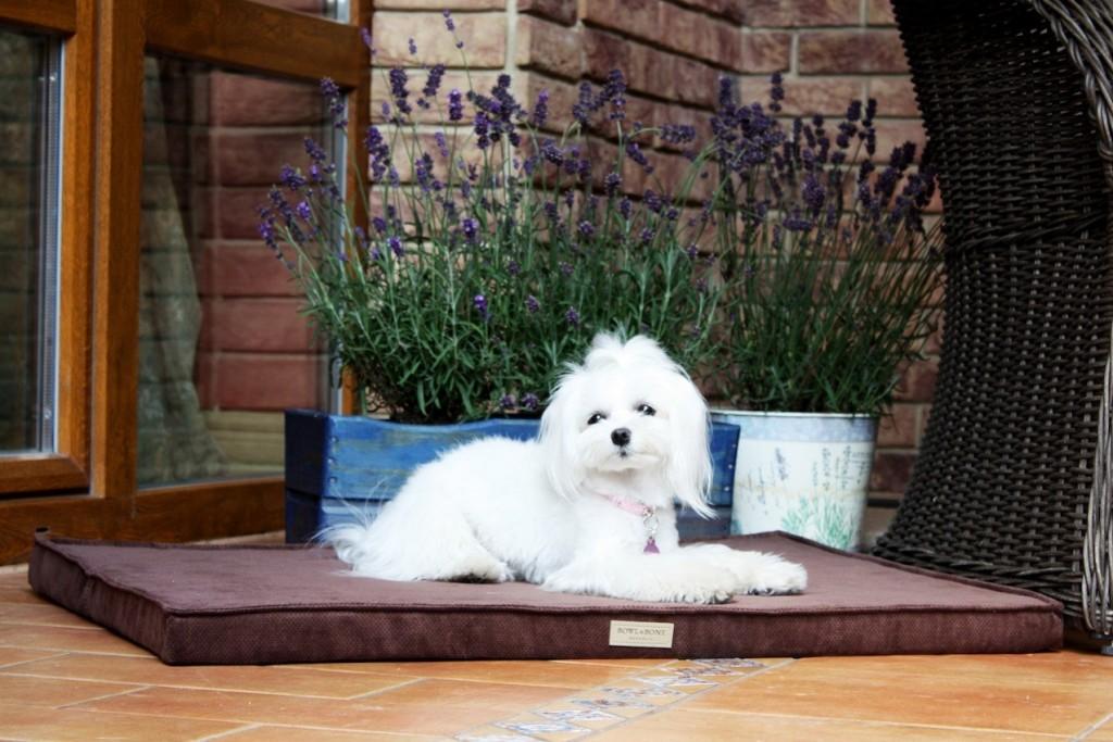 bowl_and_bone_chocolate_foam_dog_mat_4_2