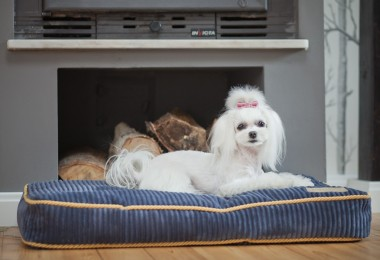 bowl_and_bone_deco_sapphire_dog_bed_cushion_4_2