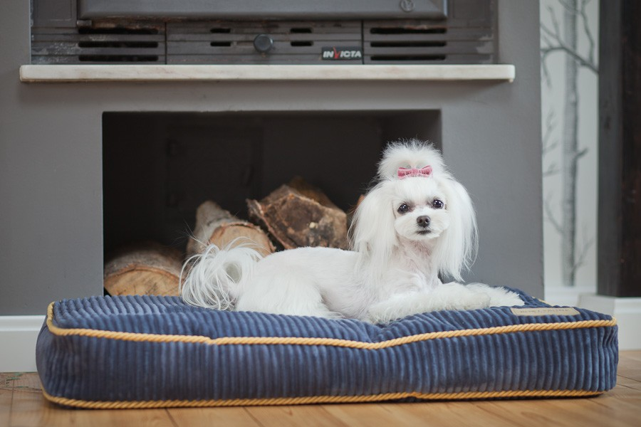 bowl_and_bone_deco_sapphire_dog_bed_cushion_4_2