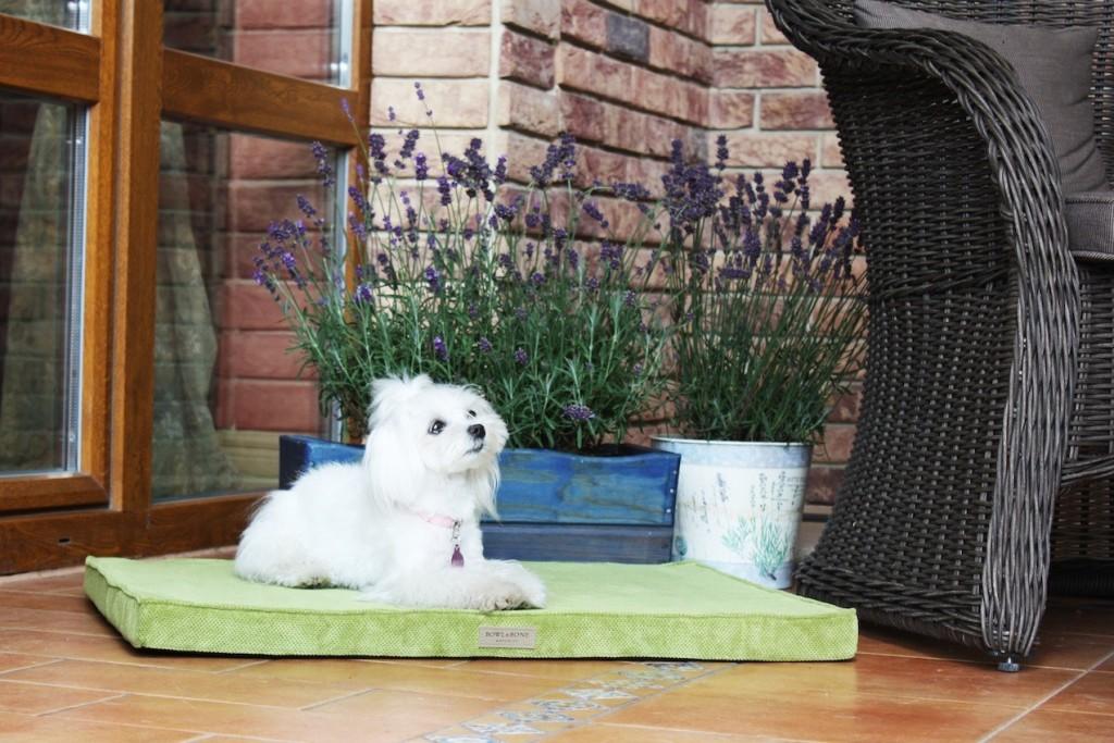 bowl_and_bone_olive_foam_dog_mat_3_2