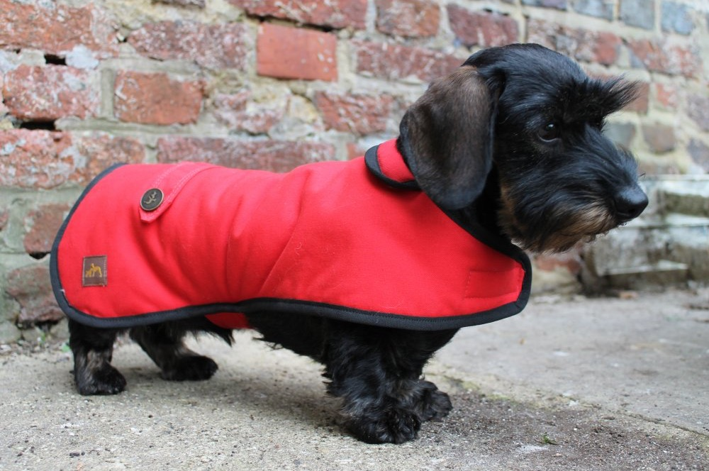 Dachshund Clothing For Dogs Uk