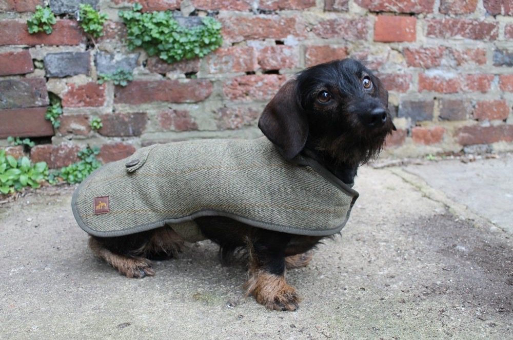 Country and Twee Green Tweed Dachshund Dog Coats