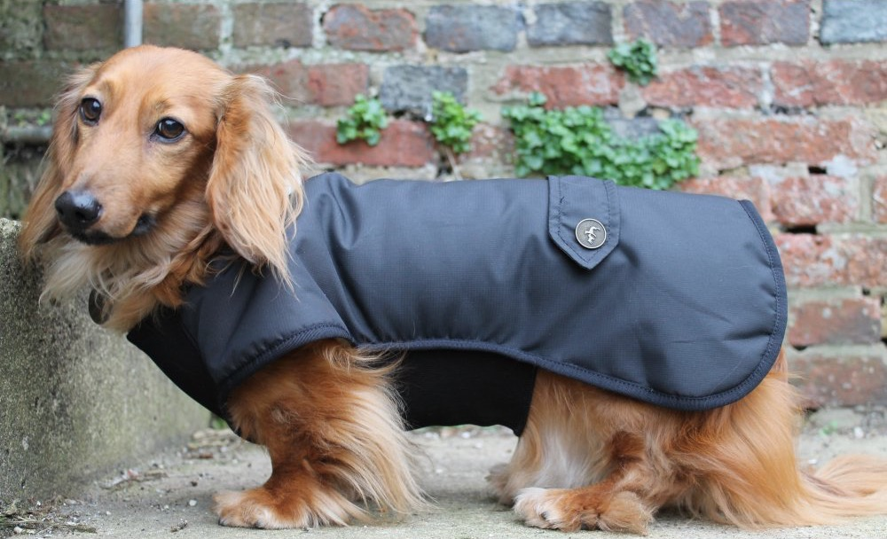 Country and Twee Waxed Black Dachshund Dog Coats