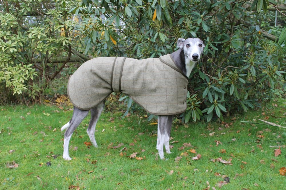 Country and Twee Tweed Greyhound Coats