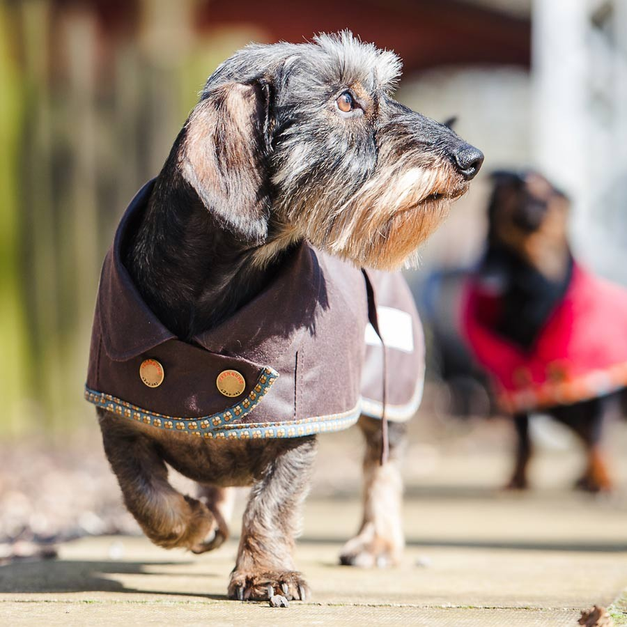 Redhound for Dogs Brown Waxed Dachshund Coat