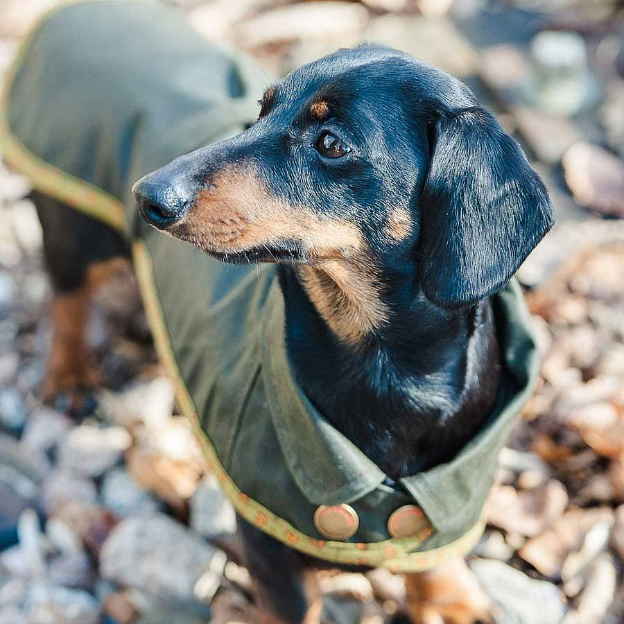 Redhound for Dogs Green Waxed Dachshund Coat