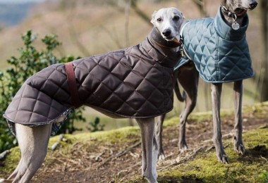 greyhound coats at Chelsea Dogs