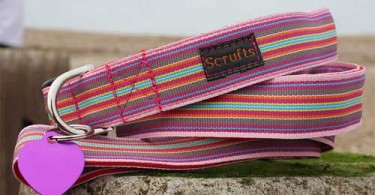 Mivvi Striped Dog Collar and Lead by Scrufts