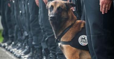 diesel-dog-paris-attacks