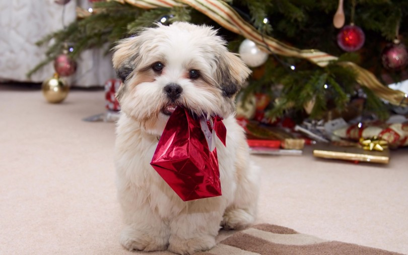 christmas presents for dogs - Christmas Presents For Dogs
