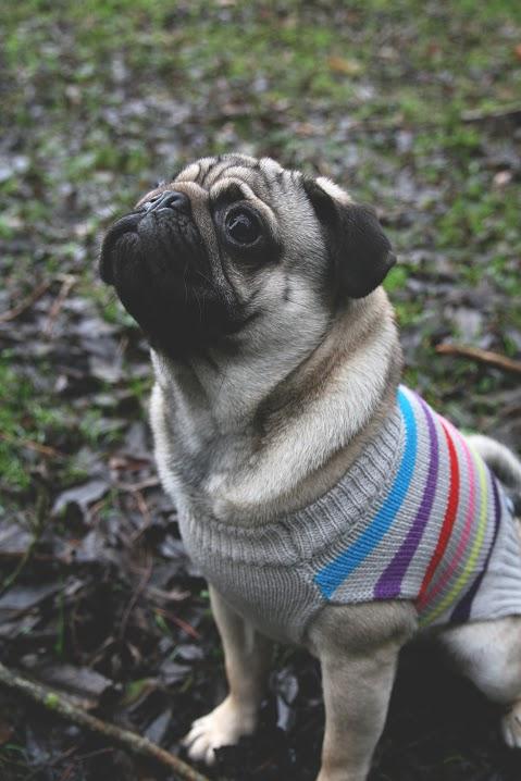 Luxury Grey Stripe Dog Jumper