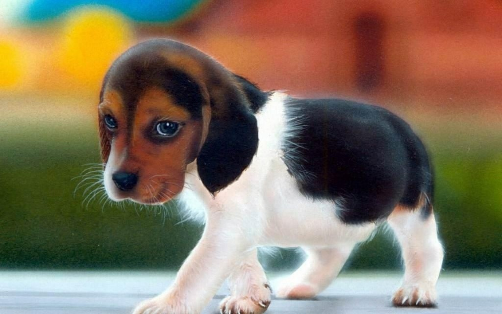 12 Cutest Dogs Of All Time