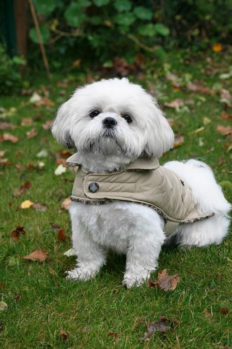 Luxury Showerproof Quilted Dog Coat