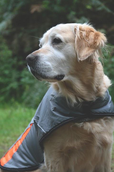 Showerproof Sporty Dog Coat by Sotnos