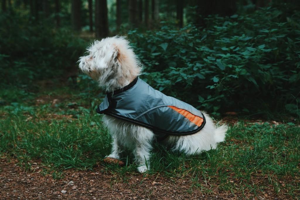 Showerproof Sporty Dog Coat Reflective