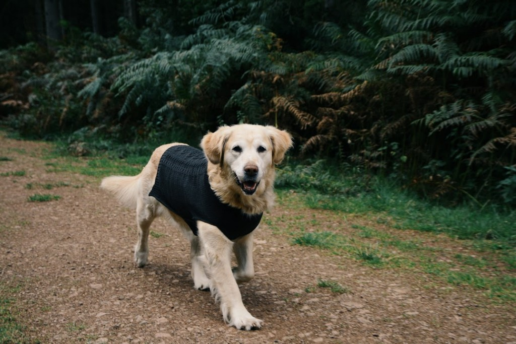 Luxury Slate Grey Cable Knit Dog Jumper