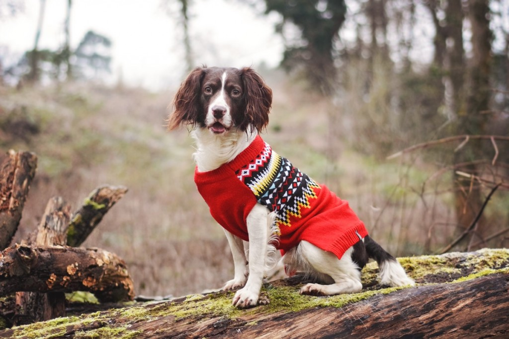 Red Fairisle luxury dog jumper by Sotnos at Chelsea Dogs
